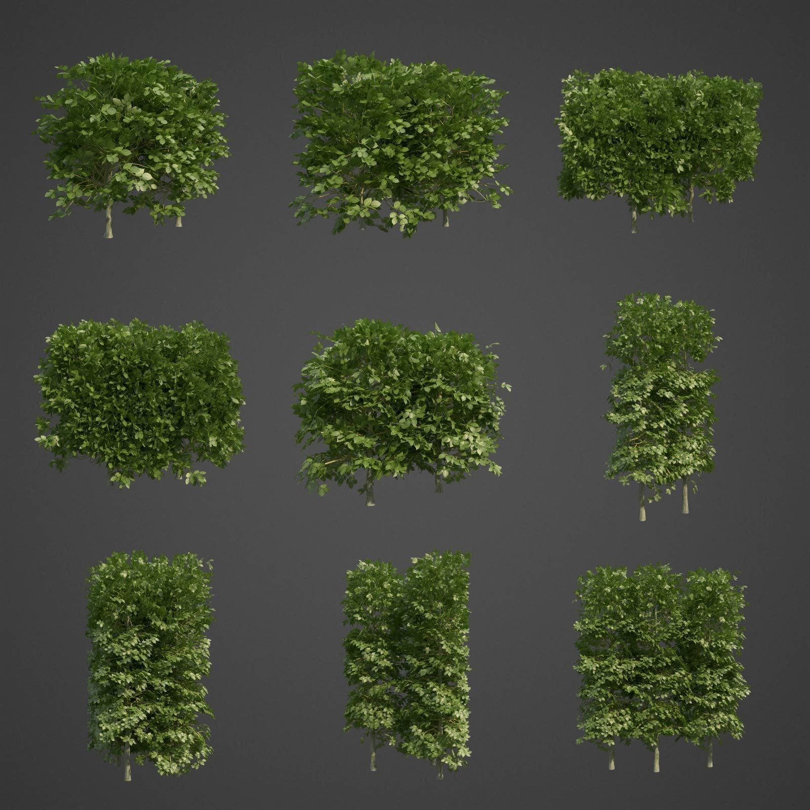 次世代材质树篱,树木,绿化3D模型